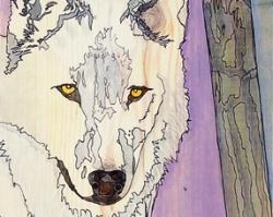 Wolf & Hawk